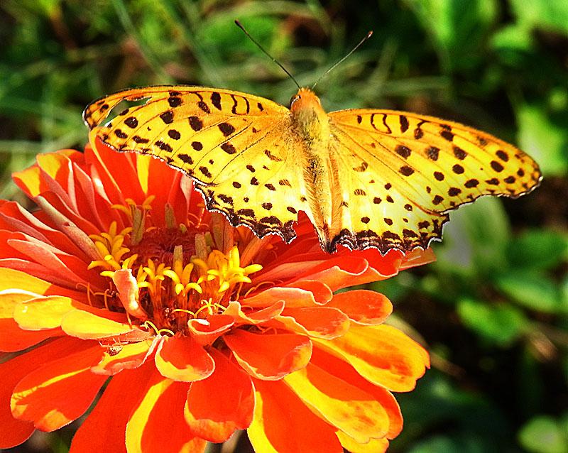 111008花と虫4