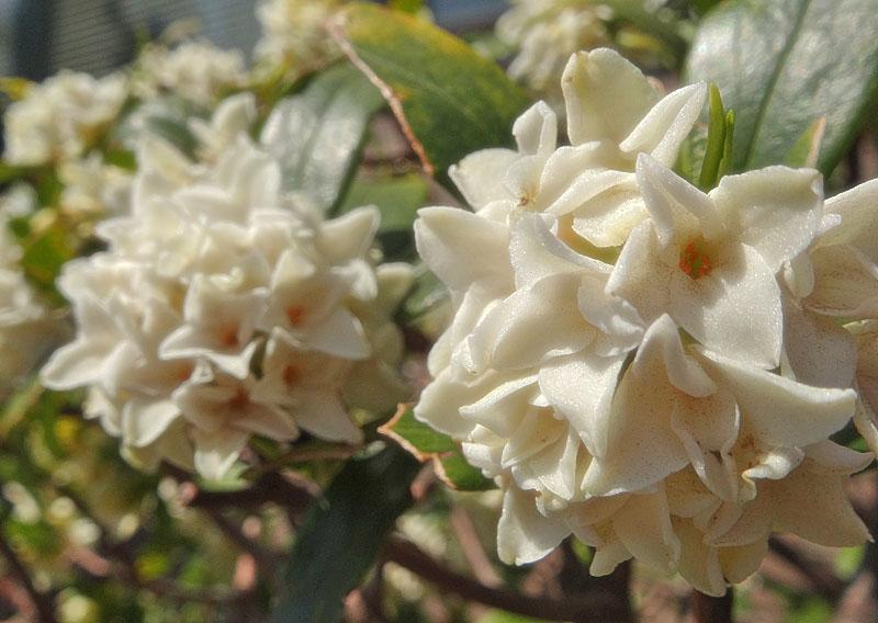 130314白い花たち1