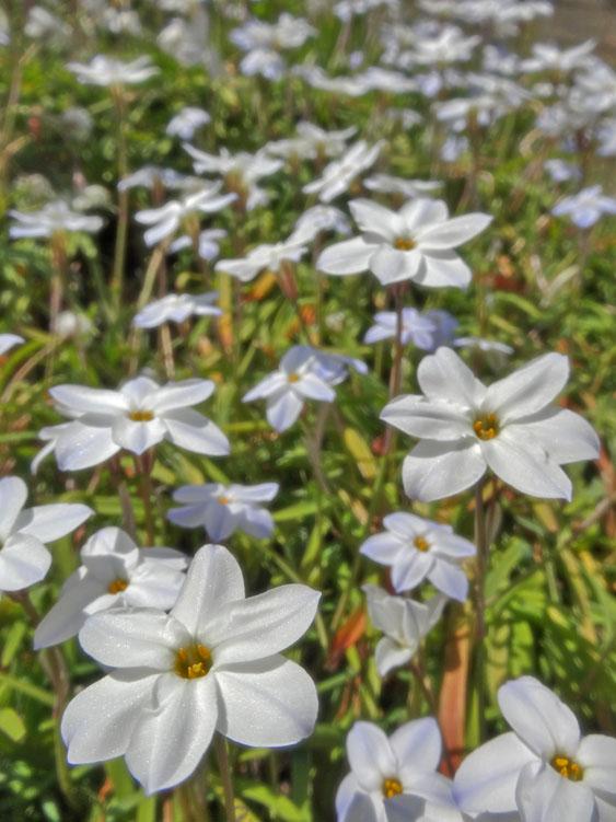 130314白い花たち2