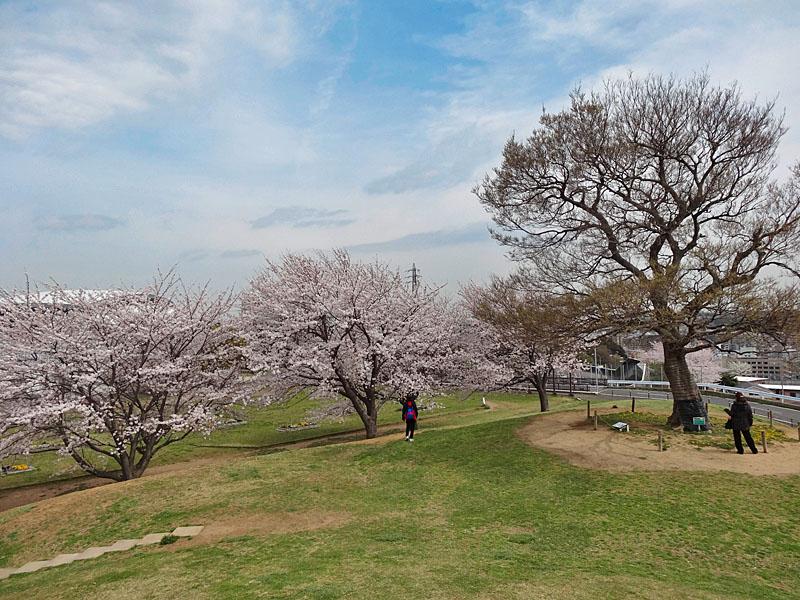 130326榎の丘と桜2