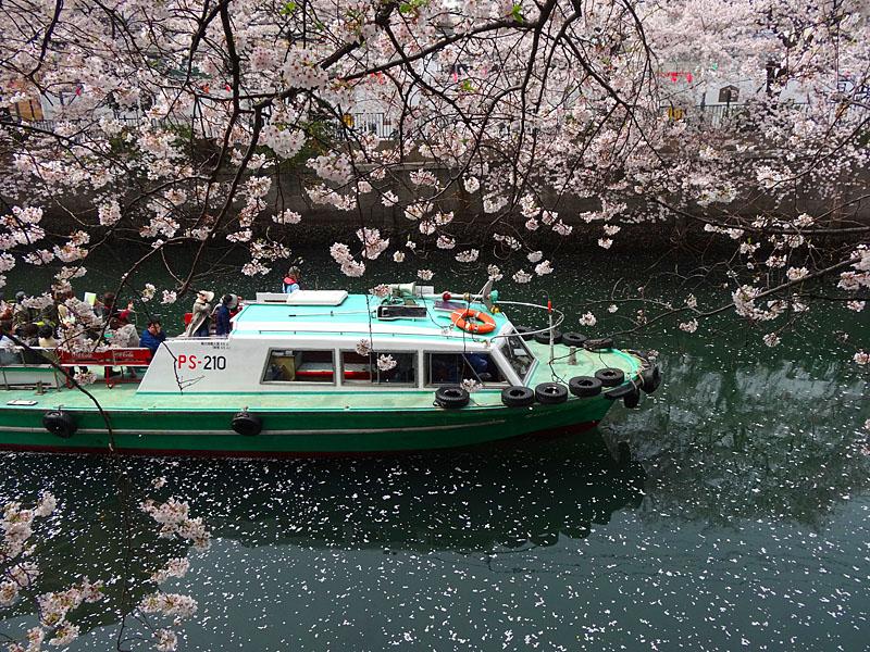 130329大岡川屋形船2