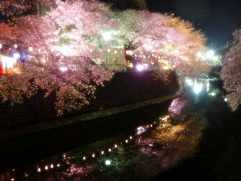 130328大岡川夜桜3