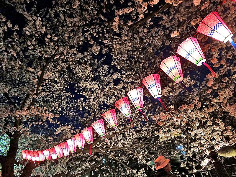 130328大岡川夜桜2