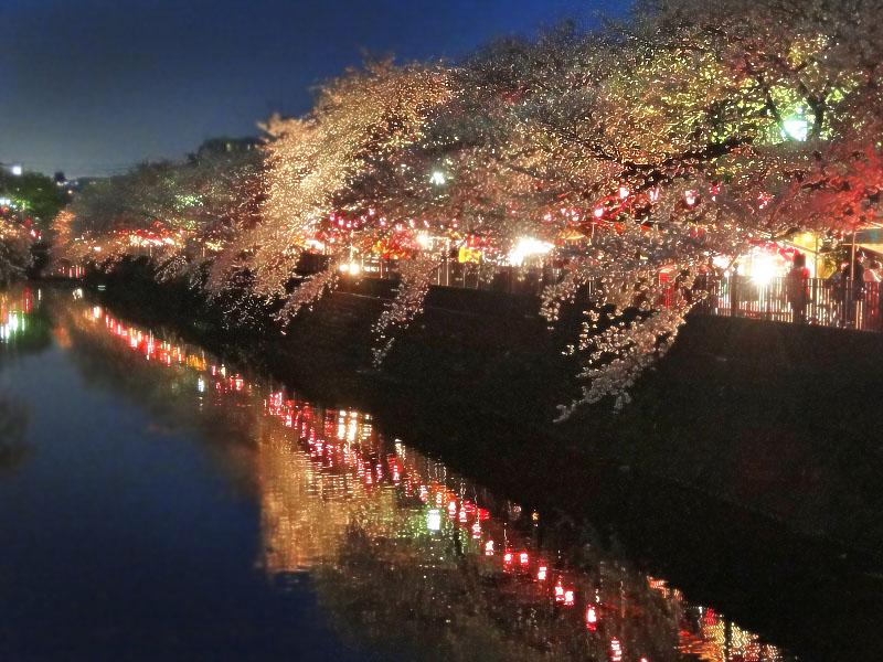 130328大岡川夜桜1