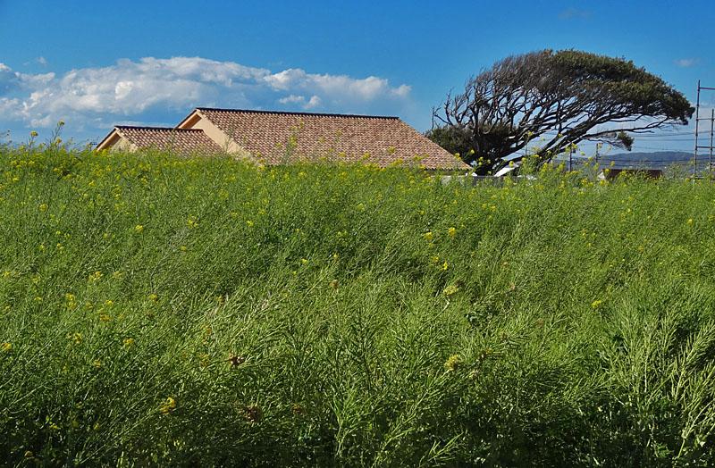 130407強風のソレイユの丘8