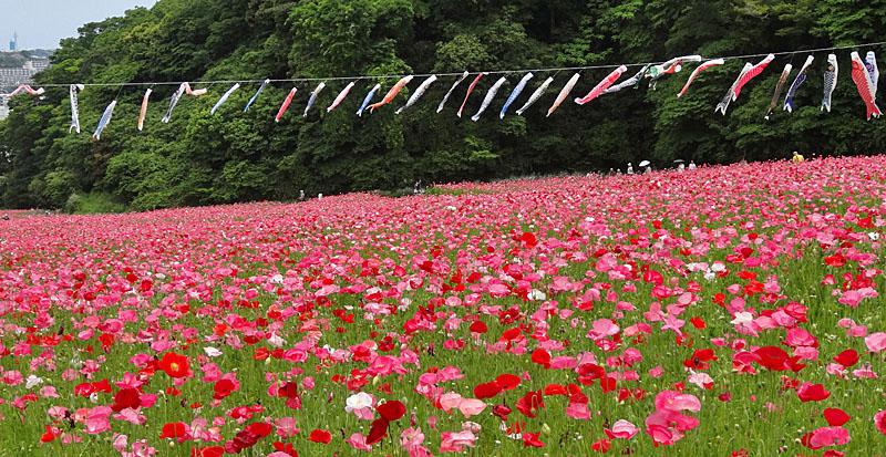 130519花の国4