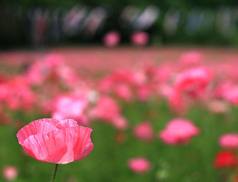 130519花の国2