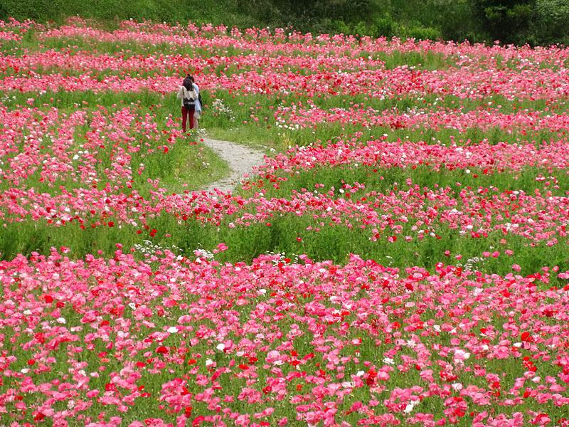 130519花の国7