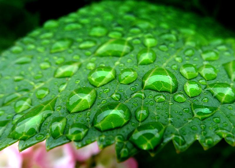 130614雨上がりの水晶たち5