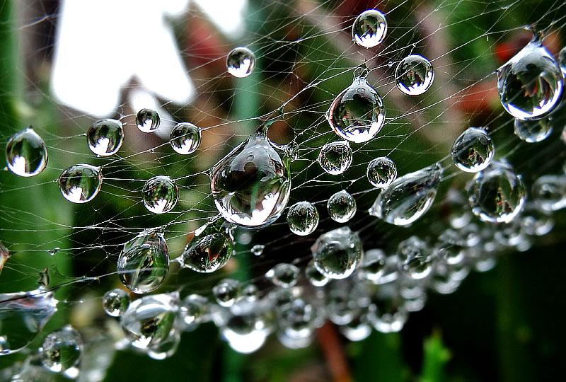130614雨上がりの水晶たち4