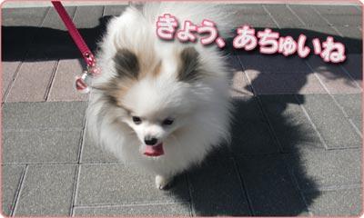 アムブロ_003_おさんぽ_B