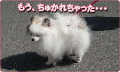アムブロ_003_おさんぽ_C