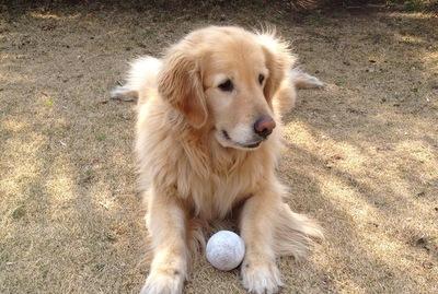 ボール返してください