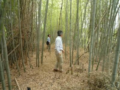 s-5,28、だいたい村裏手の竹林、視察、P1040790