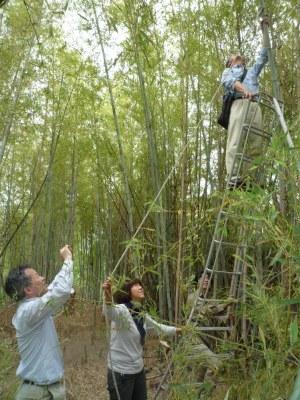 s-5,28、だいたい村裏手の竹林、実験、P1040791