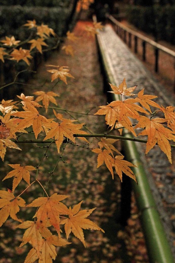 ブログ高桐院6