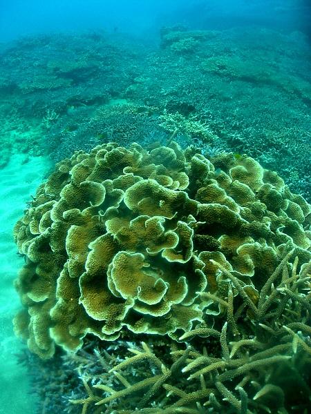 サンゴ (19)
