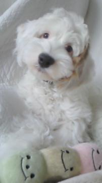 ぎん子犬3
