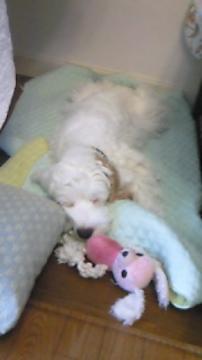 ぎん子犬1