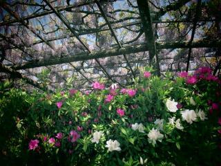 130421tennougawa-031.jpg