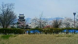 松本城と桜①