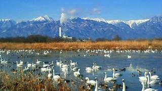 冬の北アルプスと白鳥
