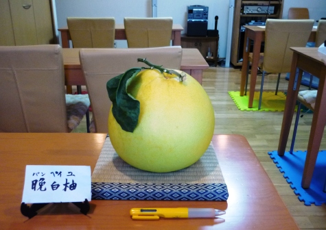 a晩白柚P1290408