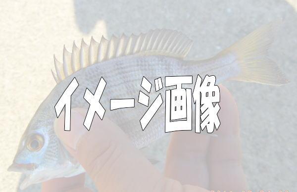 超ミニちゃん7 ^^;