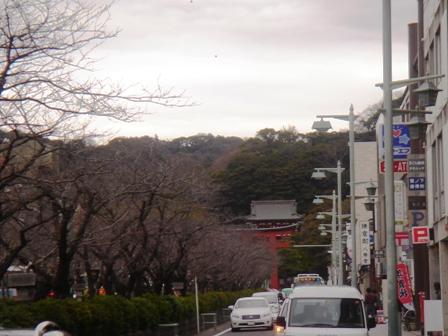 20131223鶴岡八幡宮