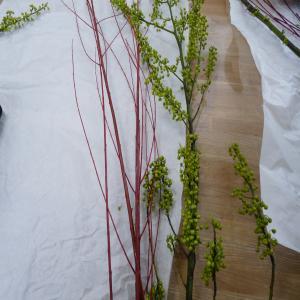 2012.1.25お花