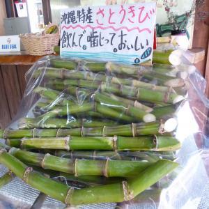 2012.2.10沖縄17