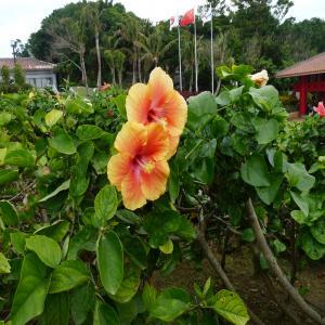 2012.2.10沖縄20