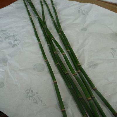 2012.3.7お花1
