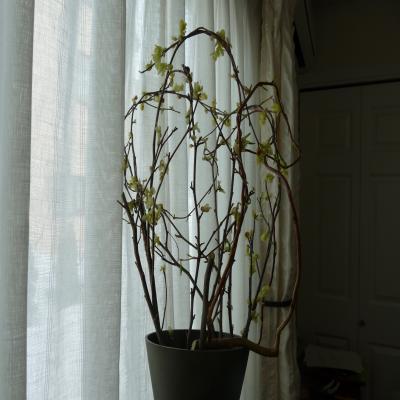 2012.4.12お花4