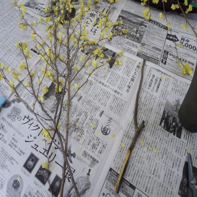 2012.4.12お花2
