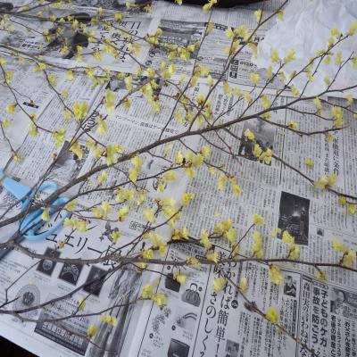 2012.4.12お花1
