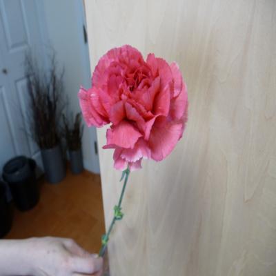 2012.4.25お花