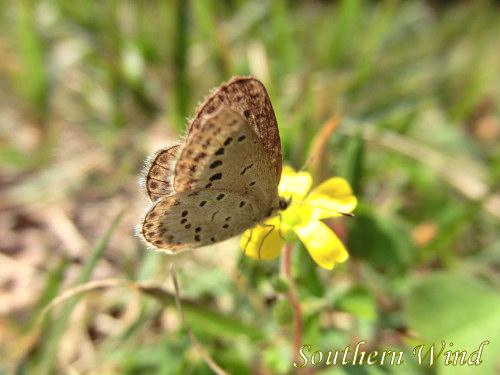 11月の蝶③