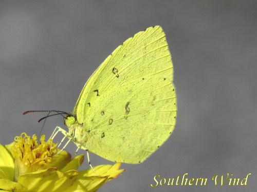 11月の蝶①