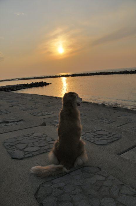 夕日とインディ