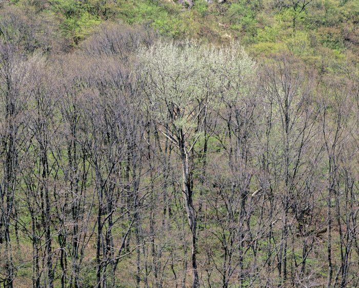 早春・加治川樹林