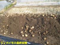 0130収穫