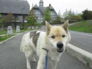 音戸迷い犬2012.4.29