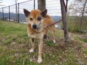 MIX迷い犬♀2012.4.21