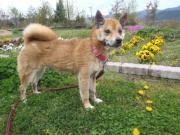 迷い犬MIX♀2012.4.21