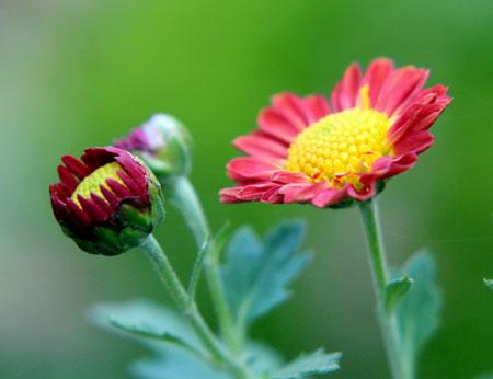 20111104庭の花 005