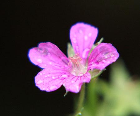 庭の花 042