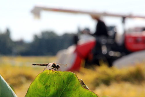 2014稲刈りと花 139