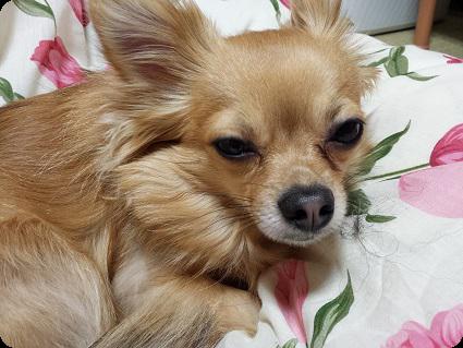 眠いチョロ太2