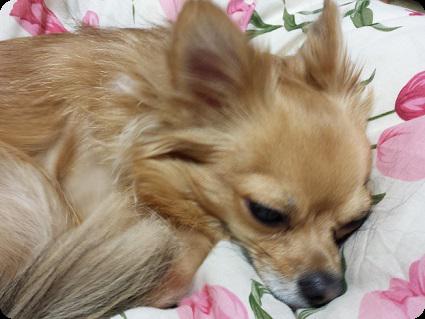 眠いチョロ太3